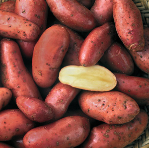 French Fingerling – Seed Savers Exchange Collection: www.seedsavers.org